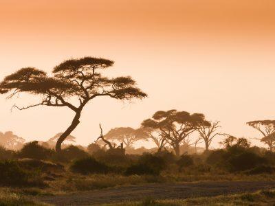 L'Allemagne envisage financer la formation professionnelle au Kenya